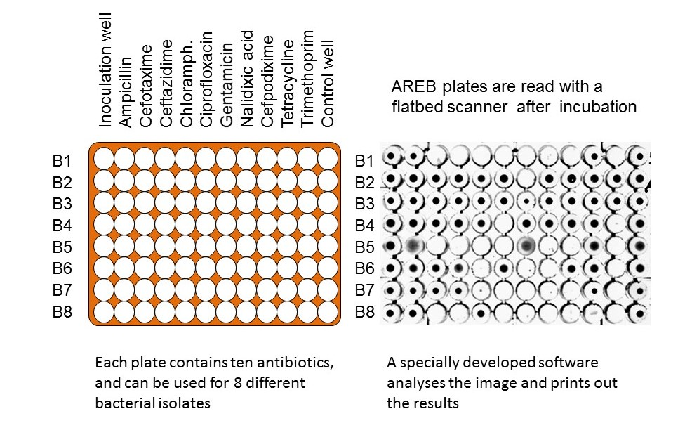 AREB-plate